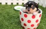 Применение заговоров на удачную продажу щенков