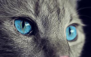 Что значит такой талисман как кошка и как его применять