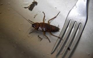 Лучшее средство от тараканов — заговоры