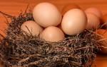 Применение куриного яйца для проведения заговоров