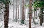 Заговоры на первый снег и их выполнение