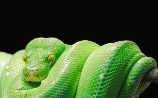 Кому подходит талисман змея и как его применять