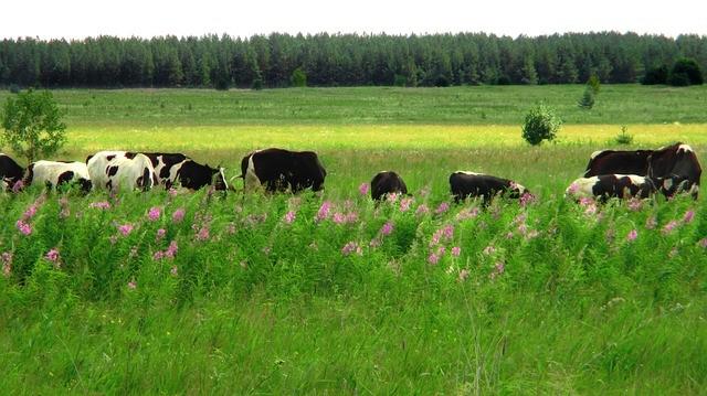 Эффективные заговоры на скотину и правила их чтения || Молитва о разведение животных