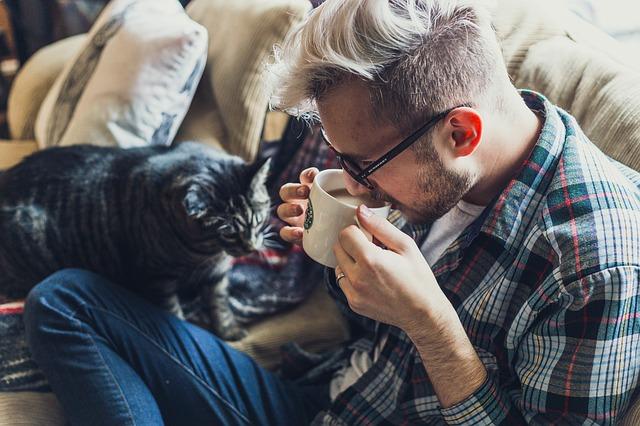 Как вернуть домой кошку